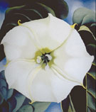Georgia O'Keeffe Single Jimson Weed 1932
