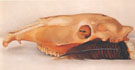 Georgia O'Keeffe Horizontal Horse or Mule Skull with  Feather 1936