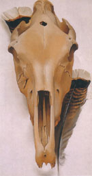 Georgia O'Keeffe Mule Skull with Turkey Feathers 1936