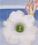 Georgia O'Keeffe Bella Donna With Pink Torch Ginger Bud 1939
