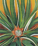 Georgia O'Keeffe Pineapple Bud 1939