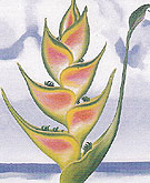 Georgia O'Keeffe Heliconia 1939