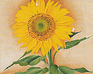 Georgia O'Keeffe A Sunflower From Maggie 1937