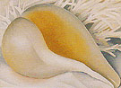 Georgia O'Keeffe Shell IV 1937