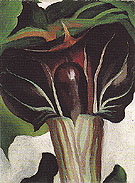 Georgia O'Keeffe Jack In Pulpit No 1 1930