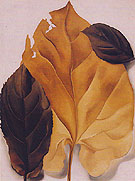 Georgia O'Keeffe Brown And Tan Leaves 1928