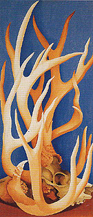 Georgia O'Keeffe Deer Horns 1938