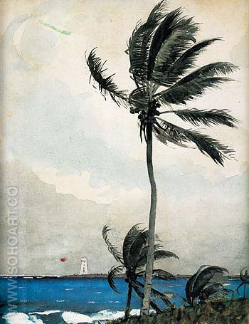 Palm Tree Nassau 1898 - Winslow Homer reproduction oil painting