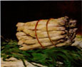 Gallery Bundle of Asparagus 1880