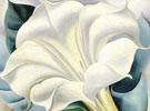White Trumpet Flower 1932 - Georgia O'Keeffe