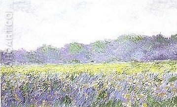 Champ d'iris Jaunes a Giverny - Claude Monet reproduction oil painting