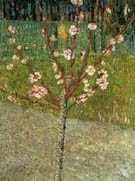 Almond Tree in Blossom 1888 - Vincent van Gogh reproduction oil painting