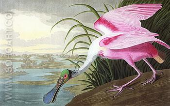 Roseate Spoonbill 1935 - John James Audubon reproduction oil painting