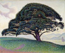 The Large Pine St Tropez c 1892 - Paul Signac
