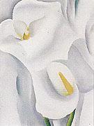 Calla Lilies 712 1930 - Georgia O'Keeffe