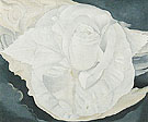 White Calico Rose 1930 - Georgia O'Keeffe