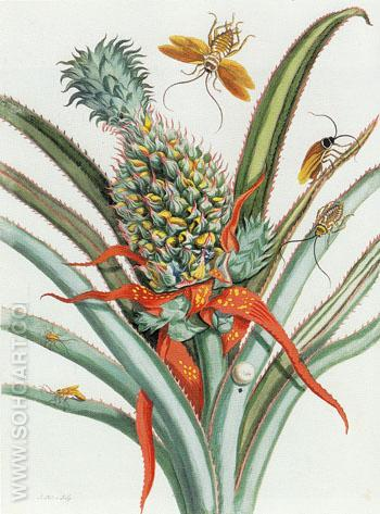 Plates 18 Spiders Ants and Hummingbirds and 9 Pineapple from Dissertation in Insect Generations and Metamorphosis in Surinam 1719 - Maria Sibylla Merian reproduction oil painting