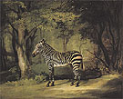Zebra 1763 - George Stubbs reproduction oil painting