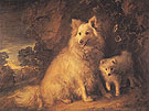 Pomeranian Bitch and Pup c1777 - Thomas Gainsborough