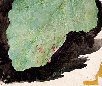 Heterocampa Biundata Walker II - Abbott Henderson Thayer reproduction oil painting