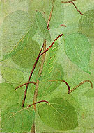Sphinx Caterpillar - Abbott Henderson Thayer