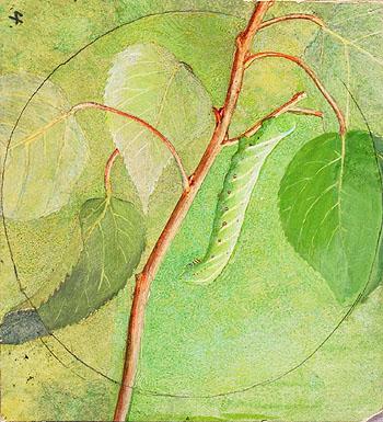 Sphinx Caterpillar I - Abbott Henderson Thayer reproduction oil painting