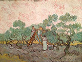 Women Picking Olives 1889 - Vincent van Gogh reproduction oil painting