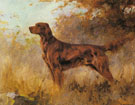 A Red Setter - Percival Leonard Rosseau reproduction oil painting