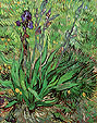 The Iris  St. Remy - Vincent van Gogh reproduction oil painting